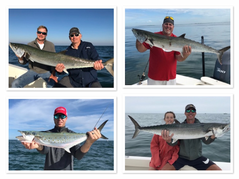 Big Kingfish, Mackerel and Bonita off Tampa