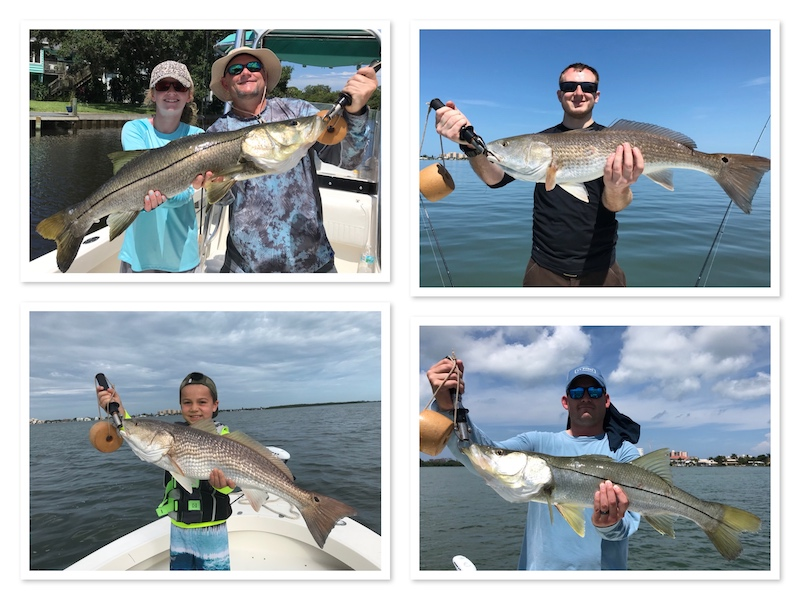 Snook and Redfish on Tampa Fishing Charters