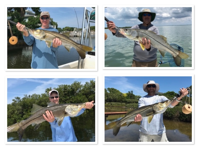 Summer Snook Fishing in Tampa