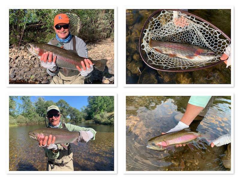 Tampa Fishing Guide Trout Vacation