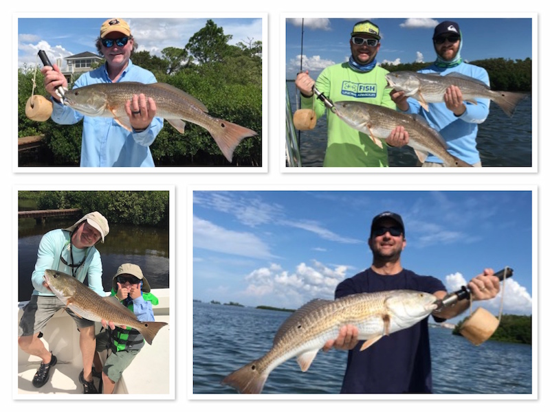Fall Redfishing in Tampa Clearwater