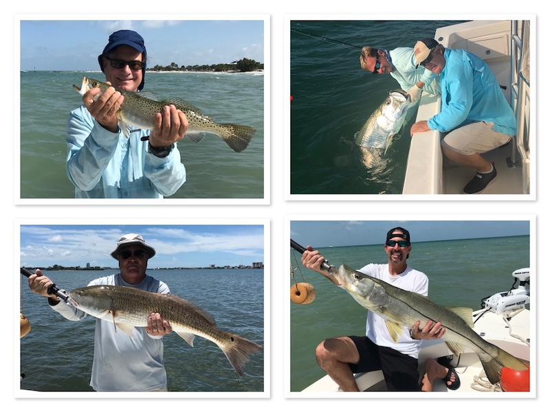 Tarpon Snook Redfish in Clearwater
