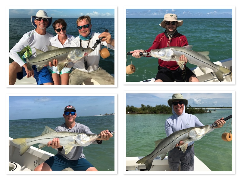 Big Summer Snook in Tampa Clearwater