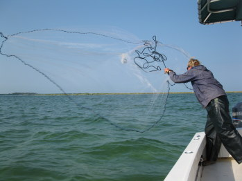 Tampa Fishing Guide Netting Bait